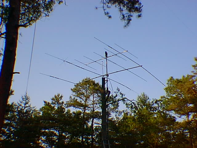 Image of a tree mounted yagi beam by N2CHK